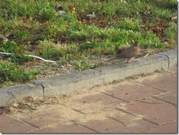 טיול בוקר בפארק 02-04-2010 001