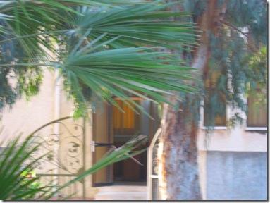 טיול בוקר בפארק 02-04-2010 013