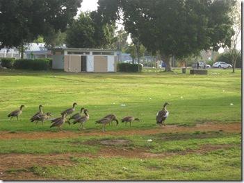 טיול בוקר בפארק 02-04-2010 044