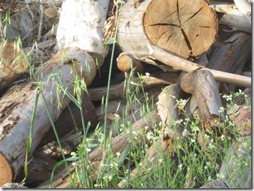 טיול בוקר בפארק 02-04-2010 085