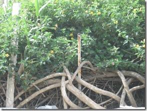 בוקרשבת בגבעת גאולה03-04-2010 001 (11)