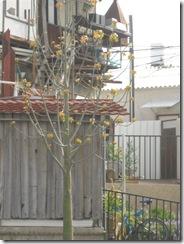 בוקרשבת בגבעת גאולה03-04-2010 001 (29)