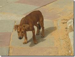בוקרשבת בגבעת גאולה03-04-2010 001 (33)