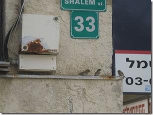 בוקרשבת בגבעת גאולה03-04-2010 001 (35)