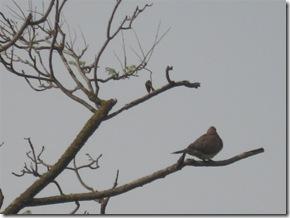 בוקרשבת בגבעת גאולה03-04-2010 001 (5)