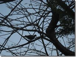 בוקר נסיונות בצילום 04-04-2010 104