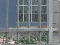 בוקר נסיונות בצילום 04-04-2010 152