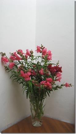 פרחים מהפארק ותות עץ 013