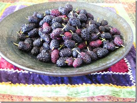 תותי עץ (14)