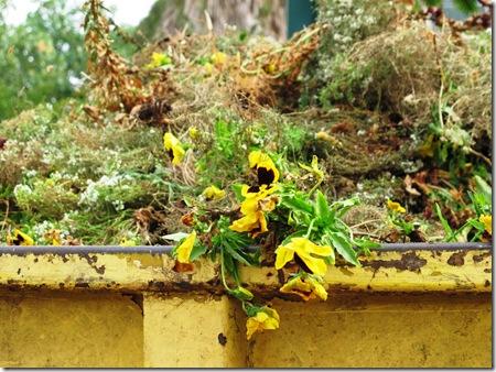 נפטרים מהפרחים הישנים (4)