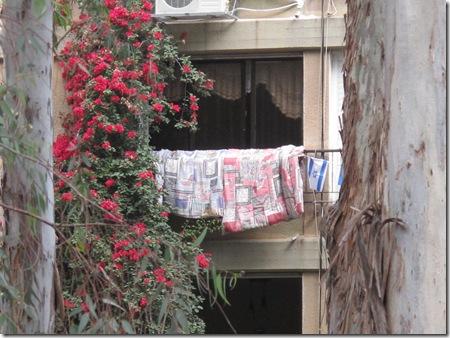 פאפאצ'י חלונות עם דגל75