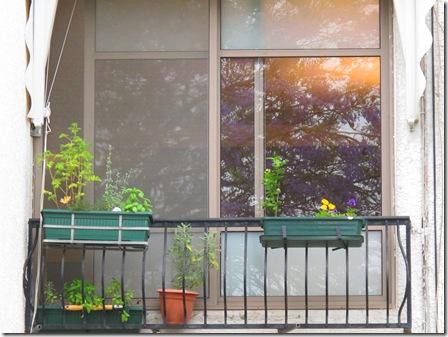 השתקפות של סגלון בחלון