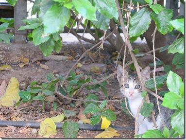 חתולים (7)