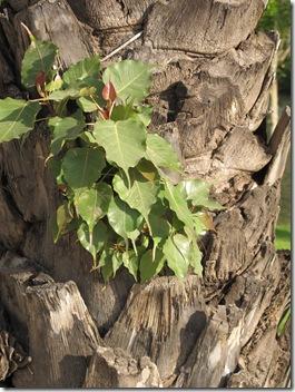 צמחים על הדקל