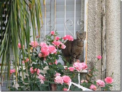 חתול ופרחים
