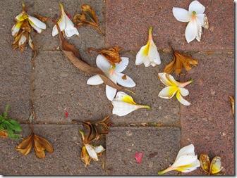 עלים ופרחים על המדרכה