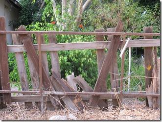 גדר עץ הרוסה (1)