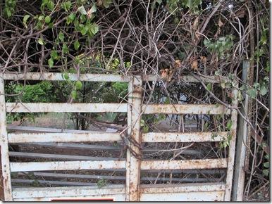 גדרות ושערים (28)