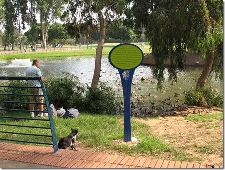 שלט ומאכיל ברווזים