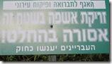 שלטים