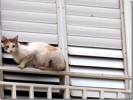 חתול על מרפסת 1