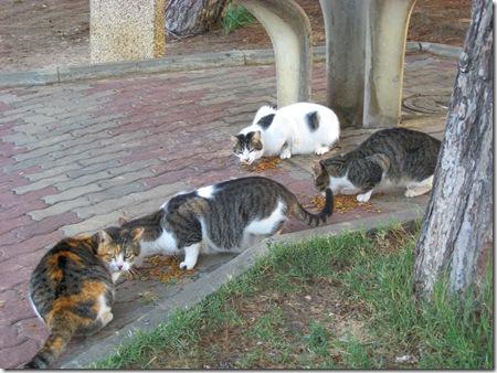 פינת האכלה לחתולים