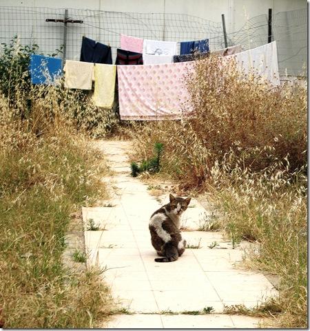 חתול דרומי וכביסה
