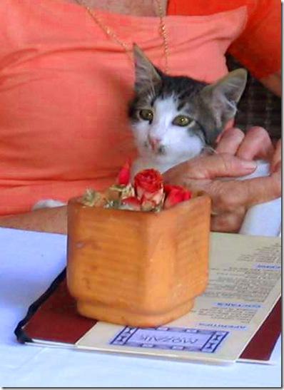 חתול במסעדה