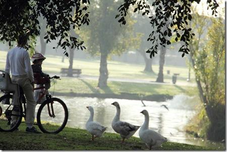 אב ובן תינוק על אופניים  מאכילים ברווזים באגם 06