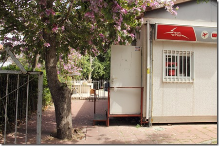 _MG_0003 בוןהיניה פורחת ליד הדואר ברחוב עזריאל