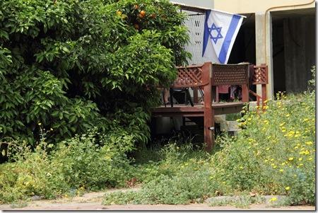 _MG_0015 דגל ישראל ועץ חושחש ברחוב אחד העם