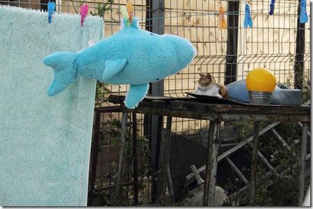 _MG_0062 בובת דג תלויה לייבוש וחתול