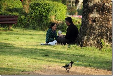 _MG_0088 זוג אוכל בפארק ועורב