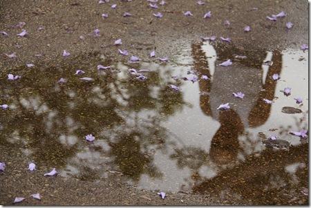 _MG_0021 צועד בפארק משתקף בשלולית ופרחי סיגלון